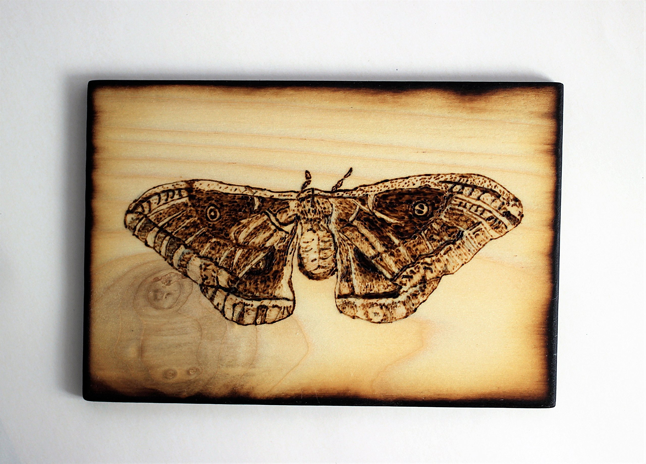 Wood Burned Polyphemus Moth Pyrography Small Woodburned Nature Insect Picture by Hendywood (Image #2)