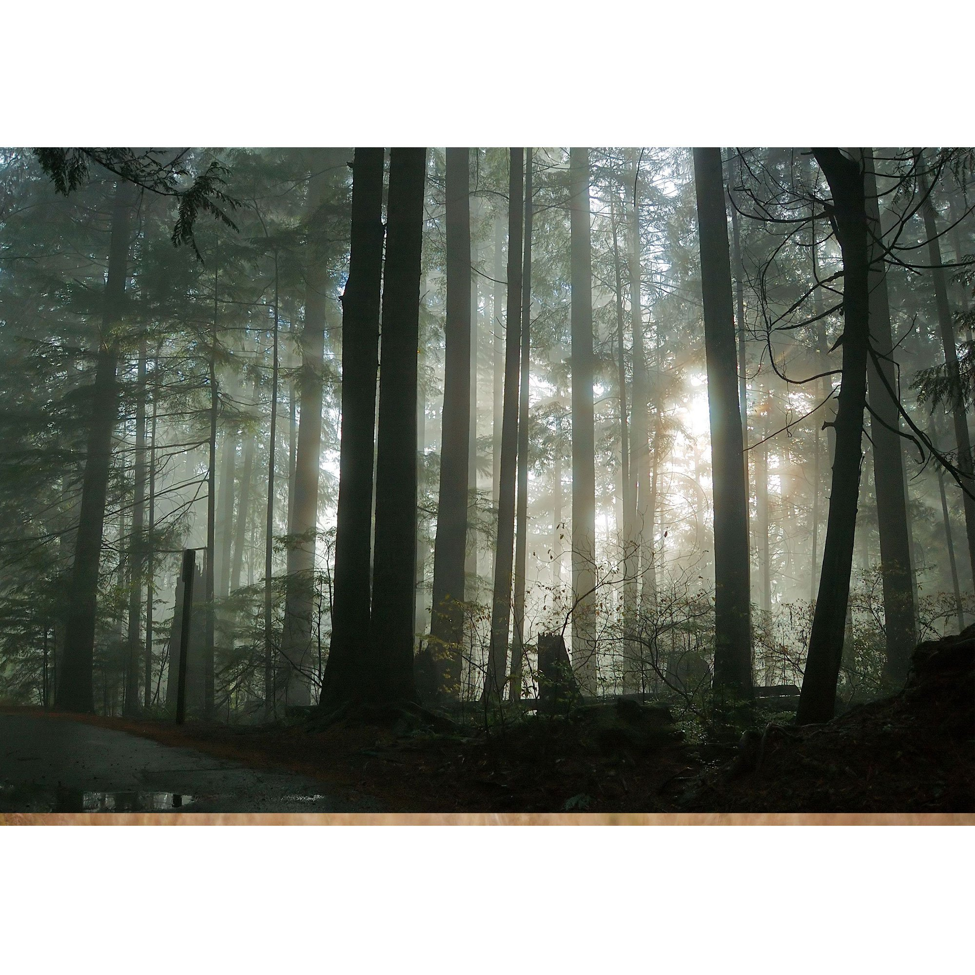wall26 - Foggy Forest - Removable Wall Mural | Self-Adhesive Large Wallpaper - 100x144 inches by wall26 (Image #2)