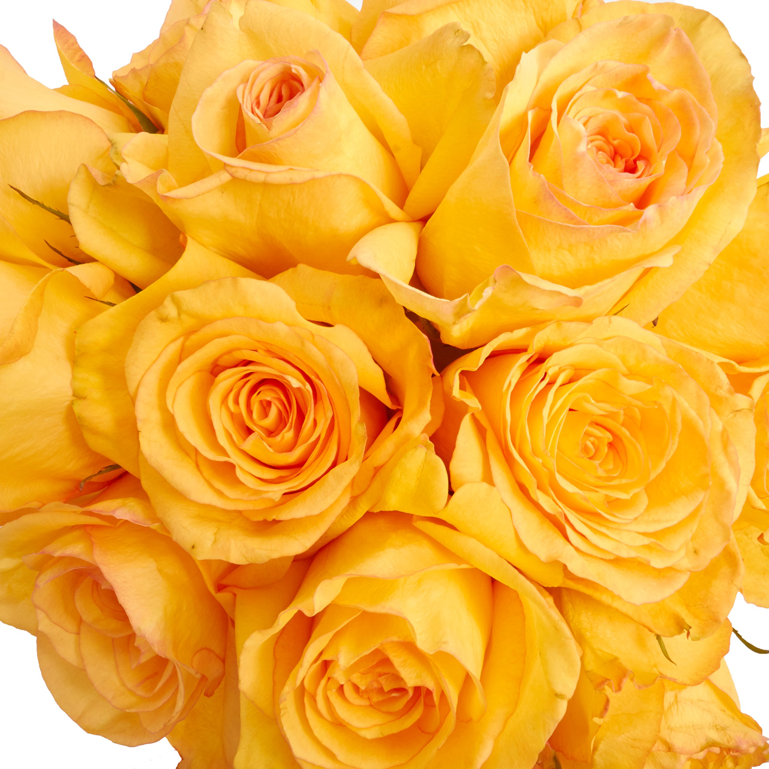 Flowers - One Dozen Yellow Roses (Free Vase Included) by From You Flowers