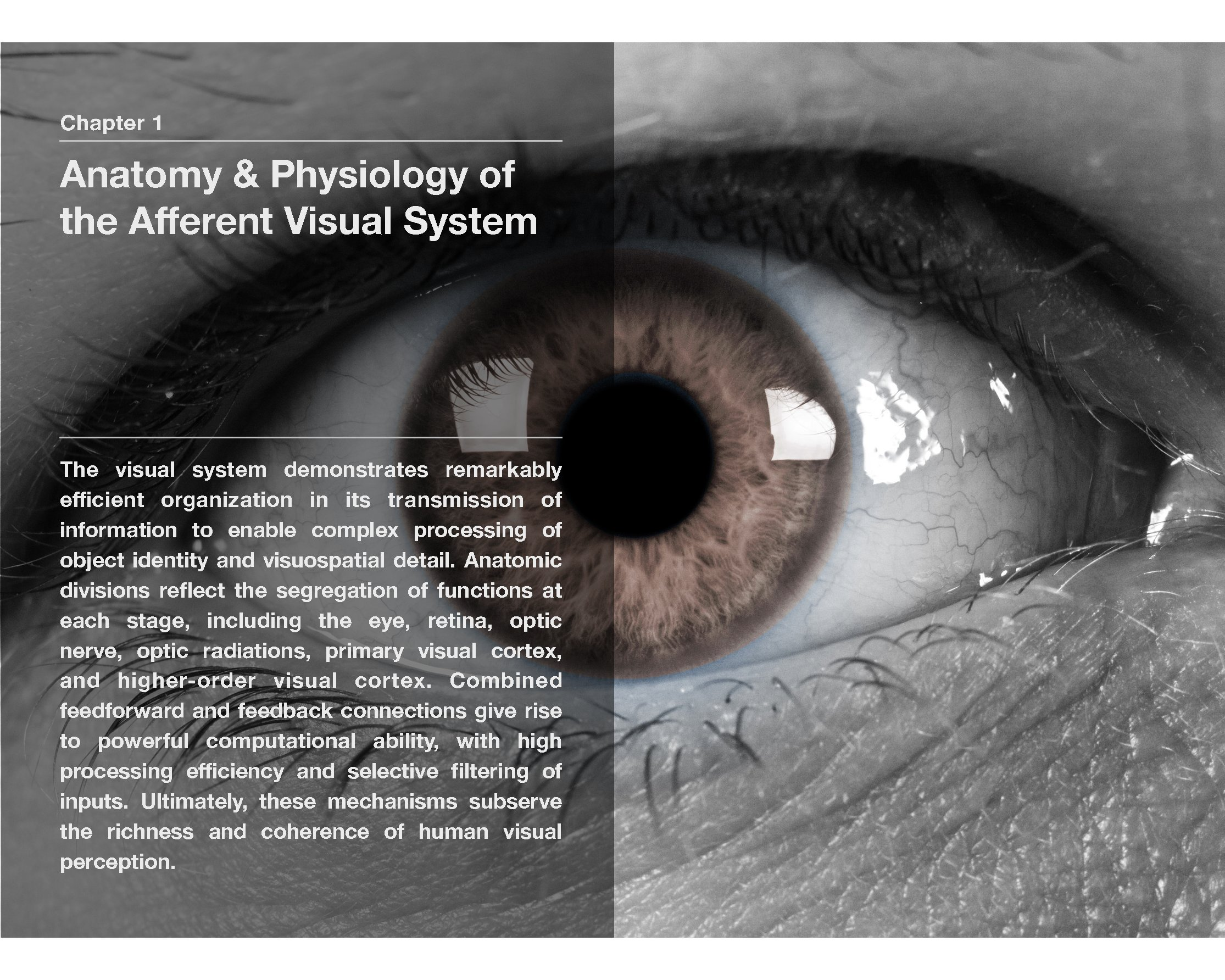 Modern Neuro-Ophthalmology: Anatomy & Physiology of the Human Visual ...