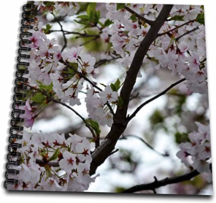 T-Shirts 3dRose Alexis Photography Blossoming Cherry Tree in Spring Black and White Photograph Flowers Cherry