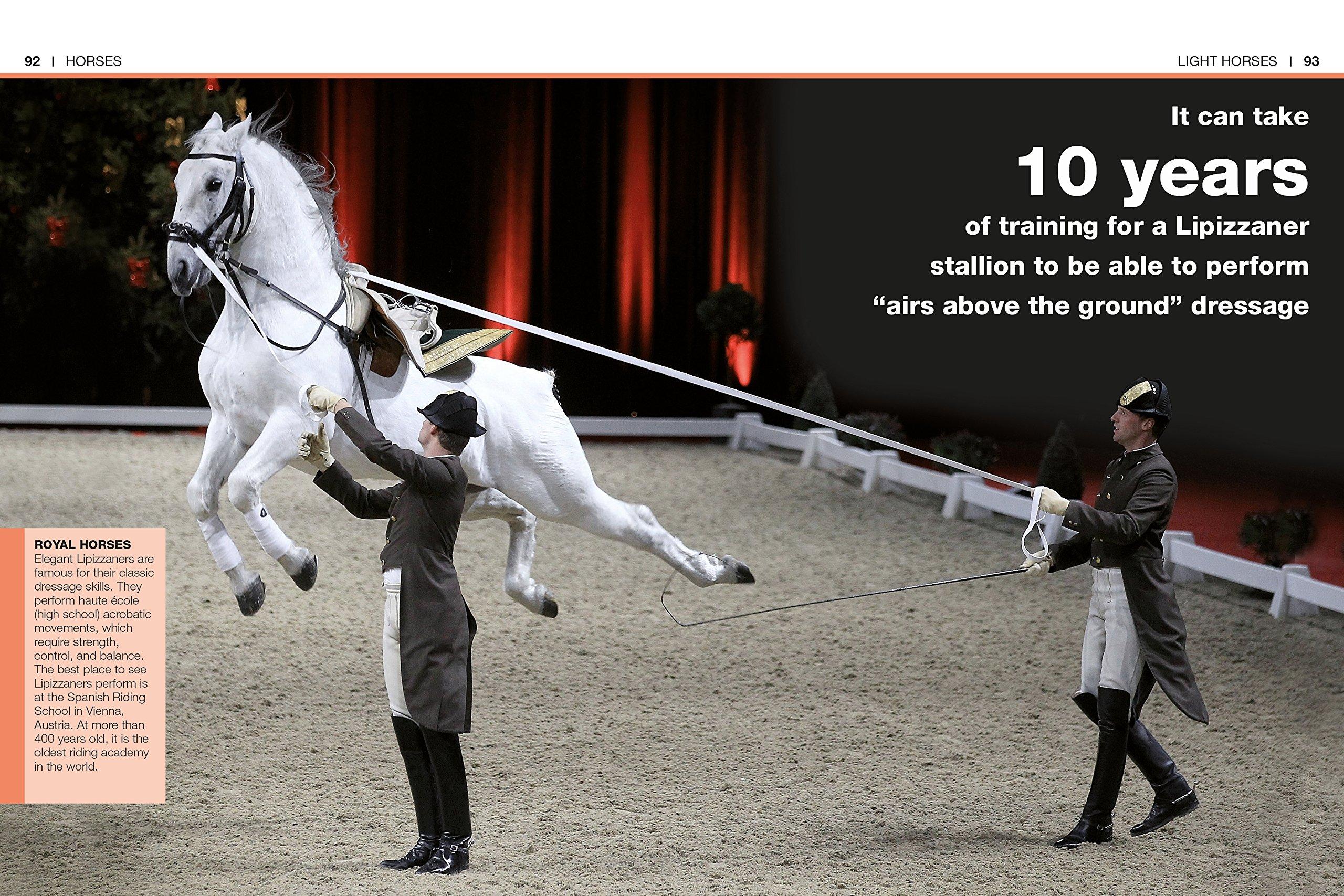 Pocket genius horses dk 9781465445872 amazon books fandeluxe Images