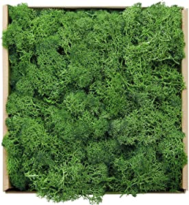 Reindeer Moss Preserved Floral Decorative Moss for Dressing Potted Plants, Fairy Garden, Terrariums and Many Other Crafts, 7 Ounce (Light Green)