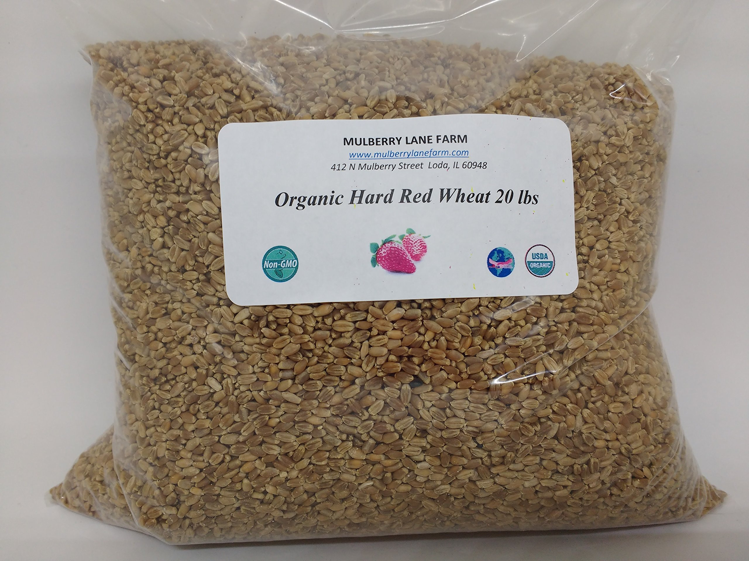 Hard Red Wheat Berries 20 lbs (Twenty pounds) kernels BULK USDA Certified Organic Non-GMO