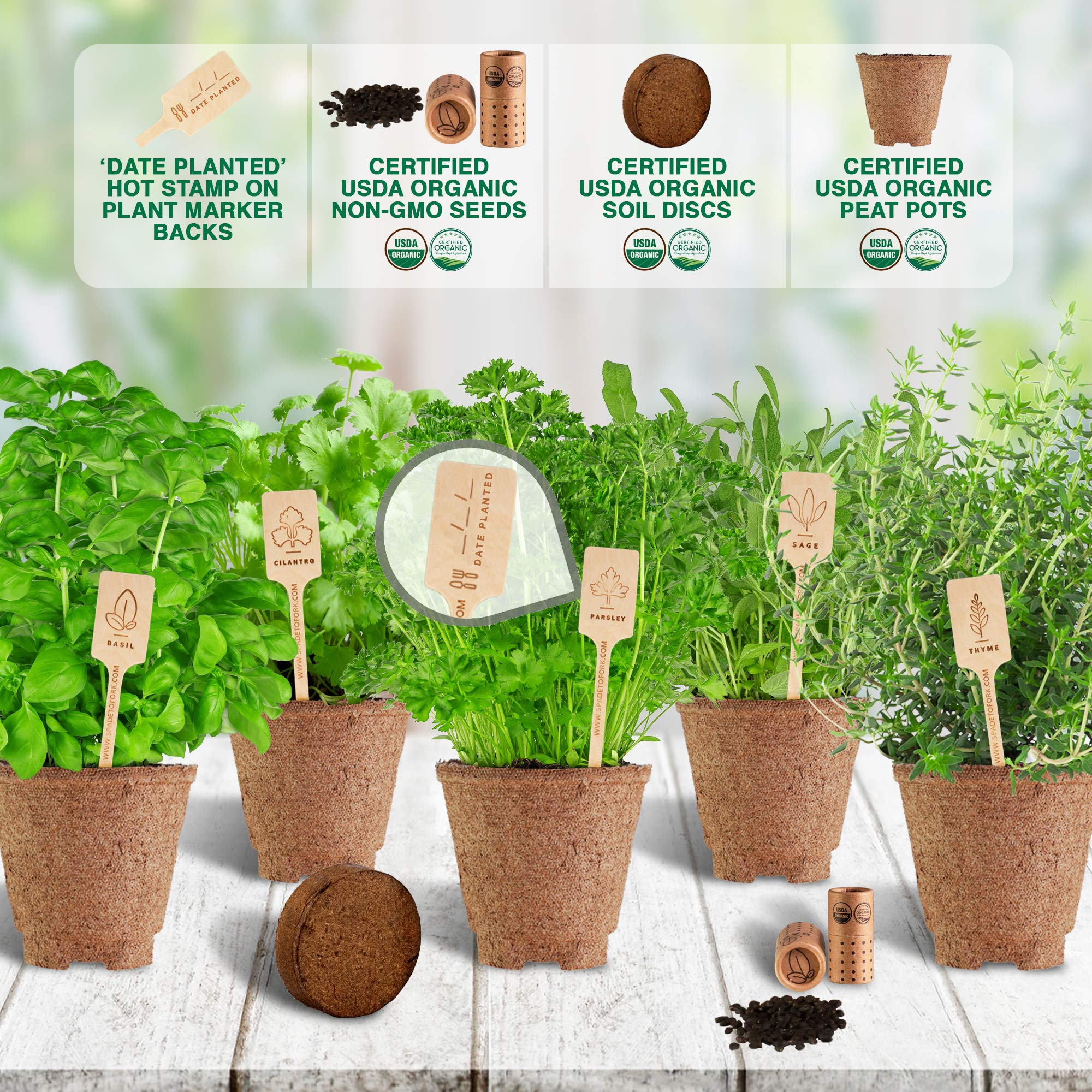 Indoor Herb Garden Starter Kit - Certified 100% USDA Organic Non GMO - Potting Soil, Peat Pots, 5 Herb Seed Basil, Cilantro, Parsley, Sage, Thyme - DIY Kitchen Grow Kit for Growing Herb Seeds Indoors by Spade To Fork (Image #4)