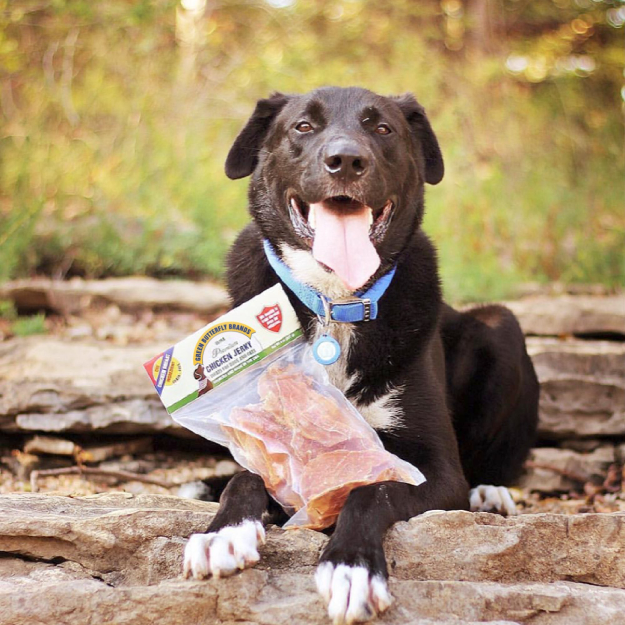 Green Butterfly Brands Chicken Jerky - Dog Treats Made in USA Only - One Ingredient: USDA Grade A Chicken Breast - No Additives or Preservatives - Grain Free, All Natural Premium Strips 8 oz. by Green Butterfly Brands (Image #4)