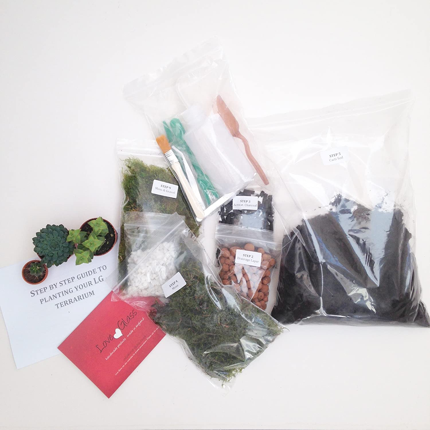 Medium with Tools & Plants Christmas Premium Terrarium Kit with Beautiful Reindeer Moss Limited Collection Packed and Made in England (Terrarium Kit with Terrarium)