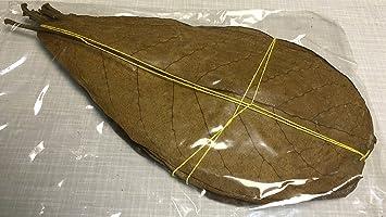 Seemandelbaumblätter 10 Stück 15-20cm natürlich gereifte und getrocknete Spitzenqualität - Catappa Leaves Indian Almond