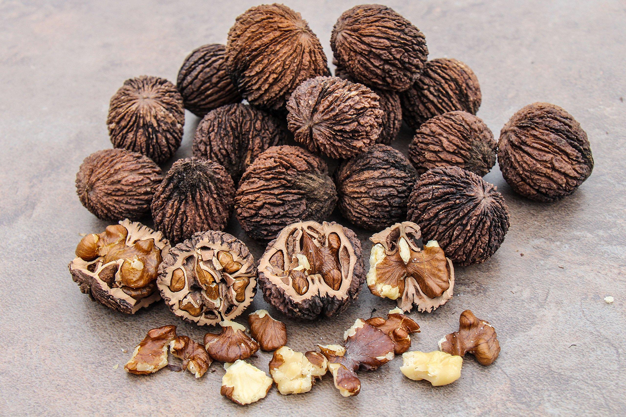 BlueApe Missouri Harvest 2017 Fresh Whole Black Walnuts 5 Pounds In Shell Organic Perfect Squirrel Food - Black Walnut Tree Seeds - Juglans Nigra