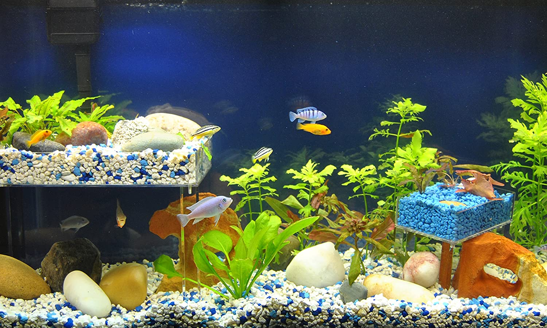 Fish price for aquarium in india - Amazon Com Eco Level Small Aquarium Terrarium Shelf System Reptile Turtle Dock 10 Gallon And Up Pet Supplies