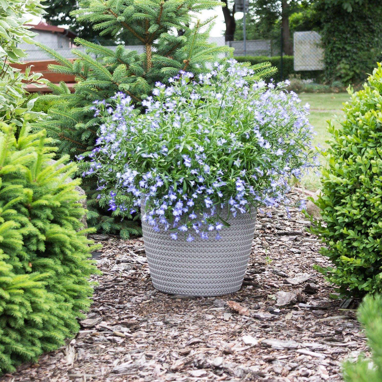 Plastique pot de fleur cache pot planteur Magnolia Jersey 30 cm taupe
