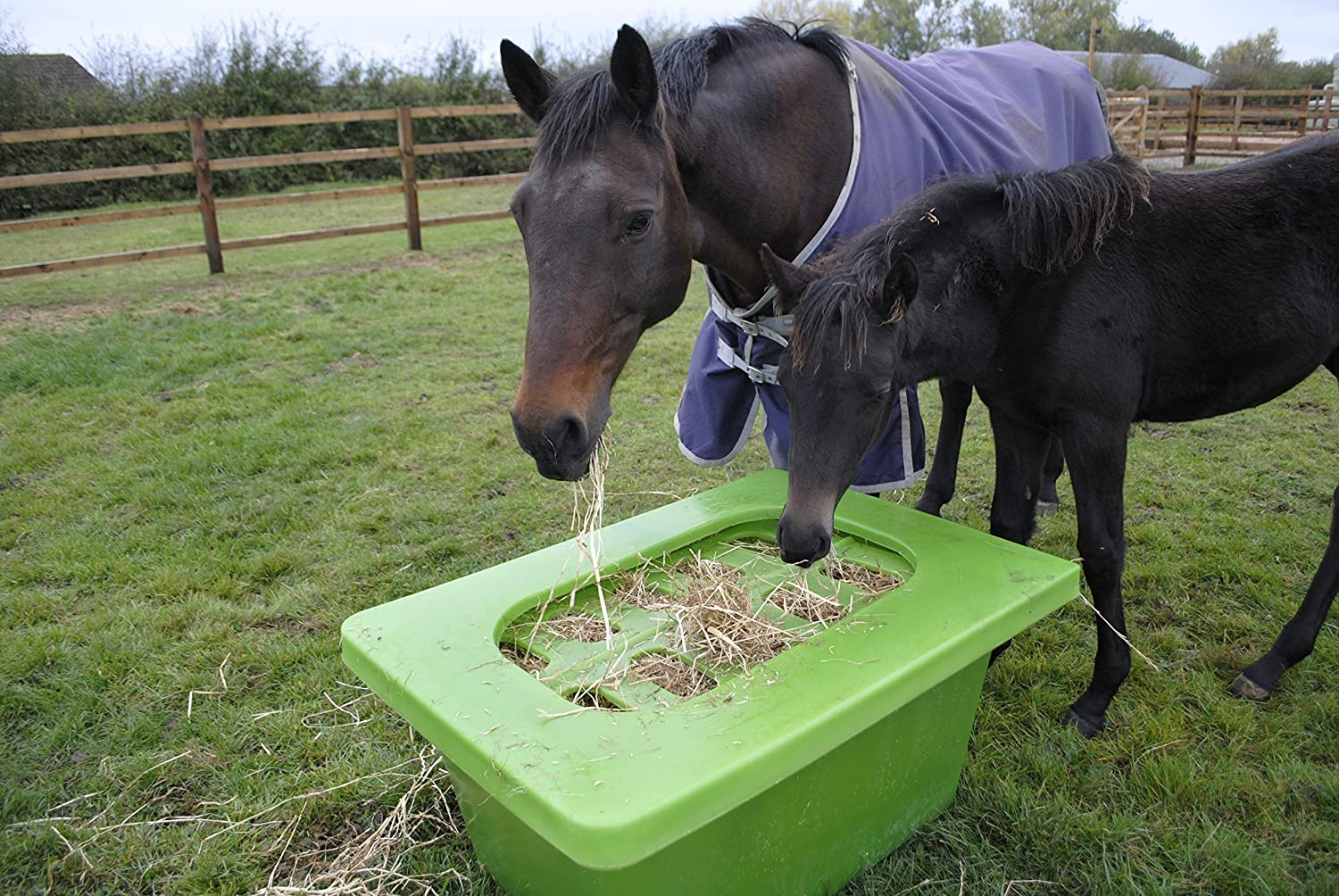Horse Feeder   Hay Saver   Slow Feeder   Manufactured In The UK (Green):  Amazon.co.uk: Sports U0026 Outdoors