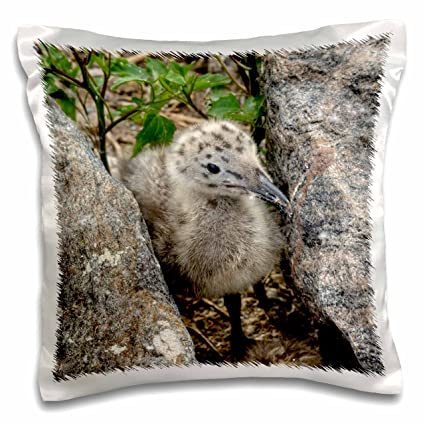 Amazon com: 3dRose pc_112549_1 Baby seagull-Pillow Case, 16 by 16