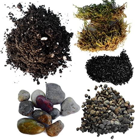Amazon Com Succulent Planter Soil Kit Total Diy Terrarium