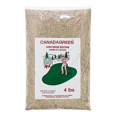 Canada Green Grass Lawn Seed-4 Lbs. Bag : Garden & Outdoor