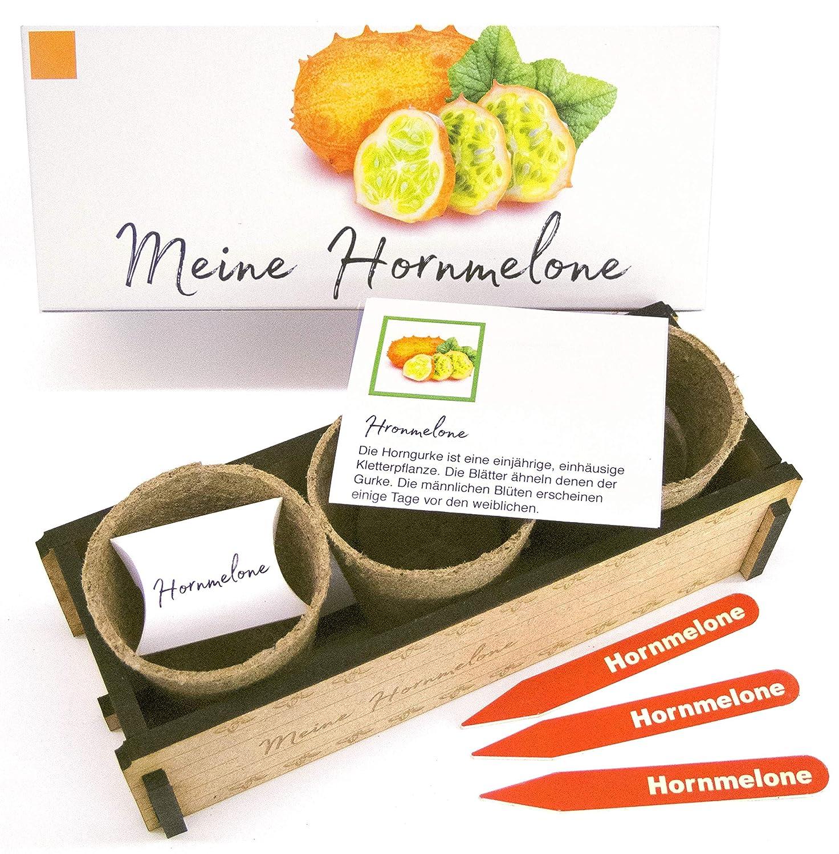 Meine Hornmelone - Ein originelles Geschenk für jeden Anlass. «Kiwano» zum Züchten. Ideales Pflanzset als Geschenk zu Weihnachten, Geburtstag oder Ostern gartenwerkstatt