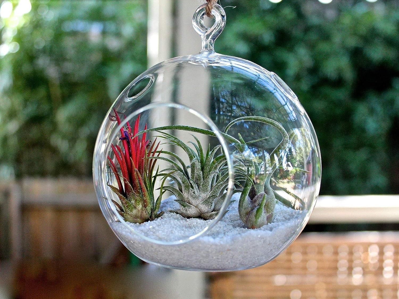 3 X WGV Glass Hanging Plant Terrarium//Votive Holder 4.5