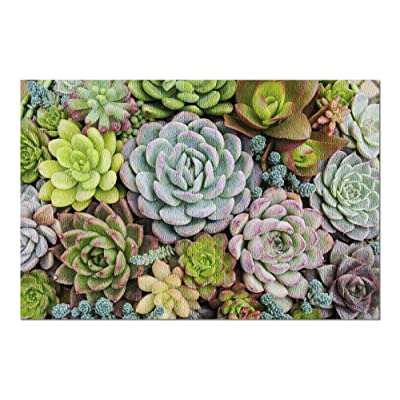 Arrangement of Many Colorful Succulents in a Planter Viewed from Above 9014222 (Premium 1000 Piece Jigsaw Puzzle for Adults, 20x30, Made in USA!): Toys & Games