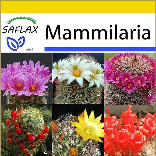 Saflax Anzucht Set Kakteen Mammilaria Mischung 40 Samen