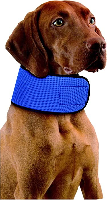 Penn Plax Glacial Gear Cooling Collar Dogs