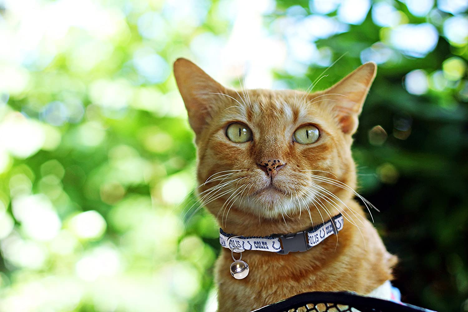 Pets First NFL CAT Collar Strong /& Adjustable Football Cat Collars with Metal Jingle Bell