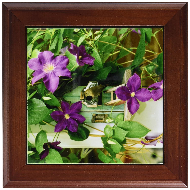 3dRose ft_83678_1 Wren in Birdhouse in Clematis Vine NA02 BJA0004 Jaynes Gallery Framed Tile, 8 by 8-Inch