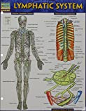 Lymphatic System (Quick Study Academic)