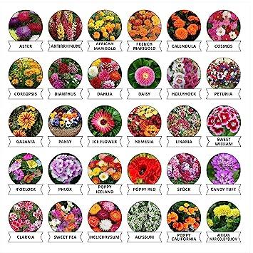 Kraft Seeds 30 Varieties of Flower Seeds Heirloom Seed For Your Garden Beautiful Bloom This Season