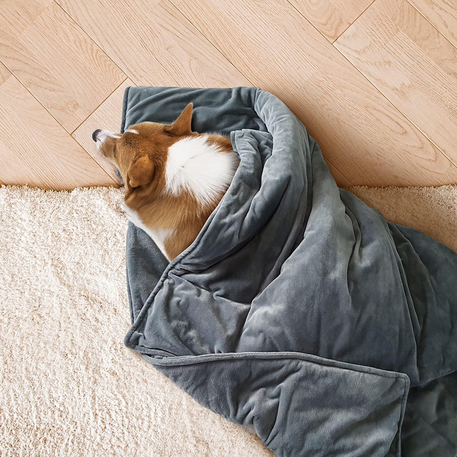 You Can Now Get A Weighted Blanket For Your Anxious Dog