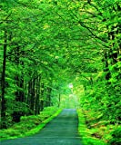 5x7ft Natural Scenic Photography Backdrops Byway Green Trees Background Backdrop