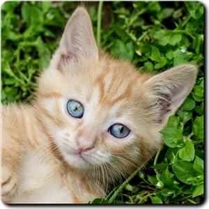 Juegos de Gatitos rompecabezas y memorama con gatos e gatitos de ...