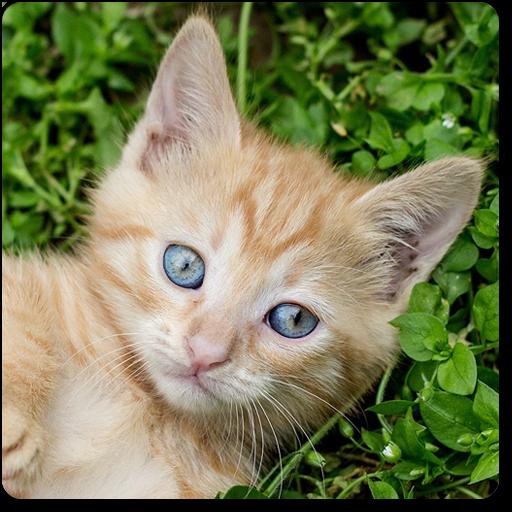 Juegos de Gatitos rompecabezas y memorama con gatos e gatitos de peluche: Amazon.es: Appstore para Android