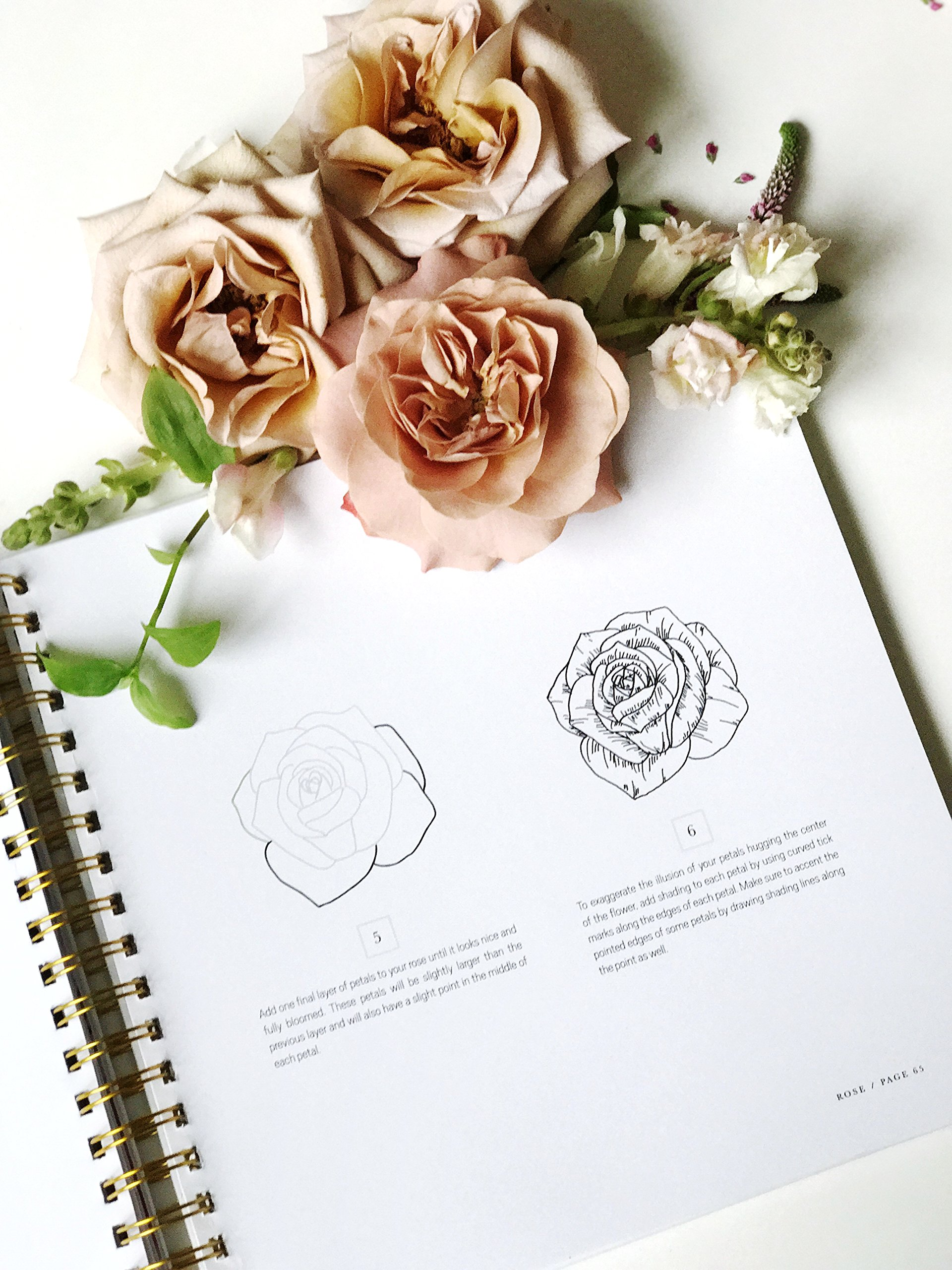 How To Draw Modern Florals: An Introduction To The Art Of Flowers, Cacti,  And More: Alli Koch, Paige Tate Select: 9781944515508: Amazon: Books