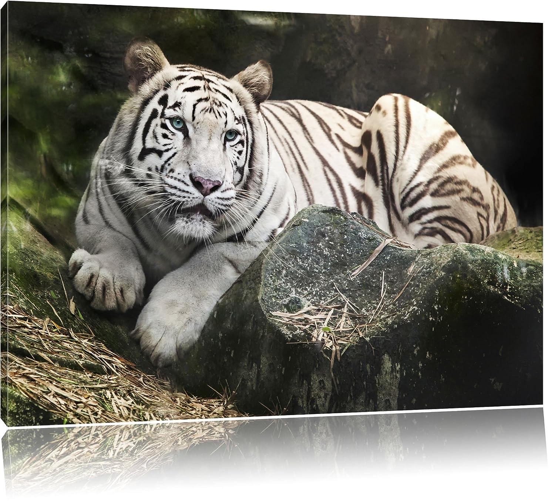Niedlich Tiger Rahmengeschäft Fotos - Familienfoto Kunst Ideen ...