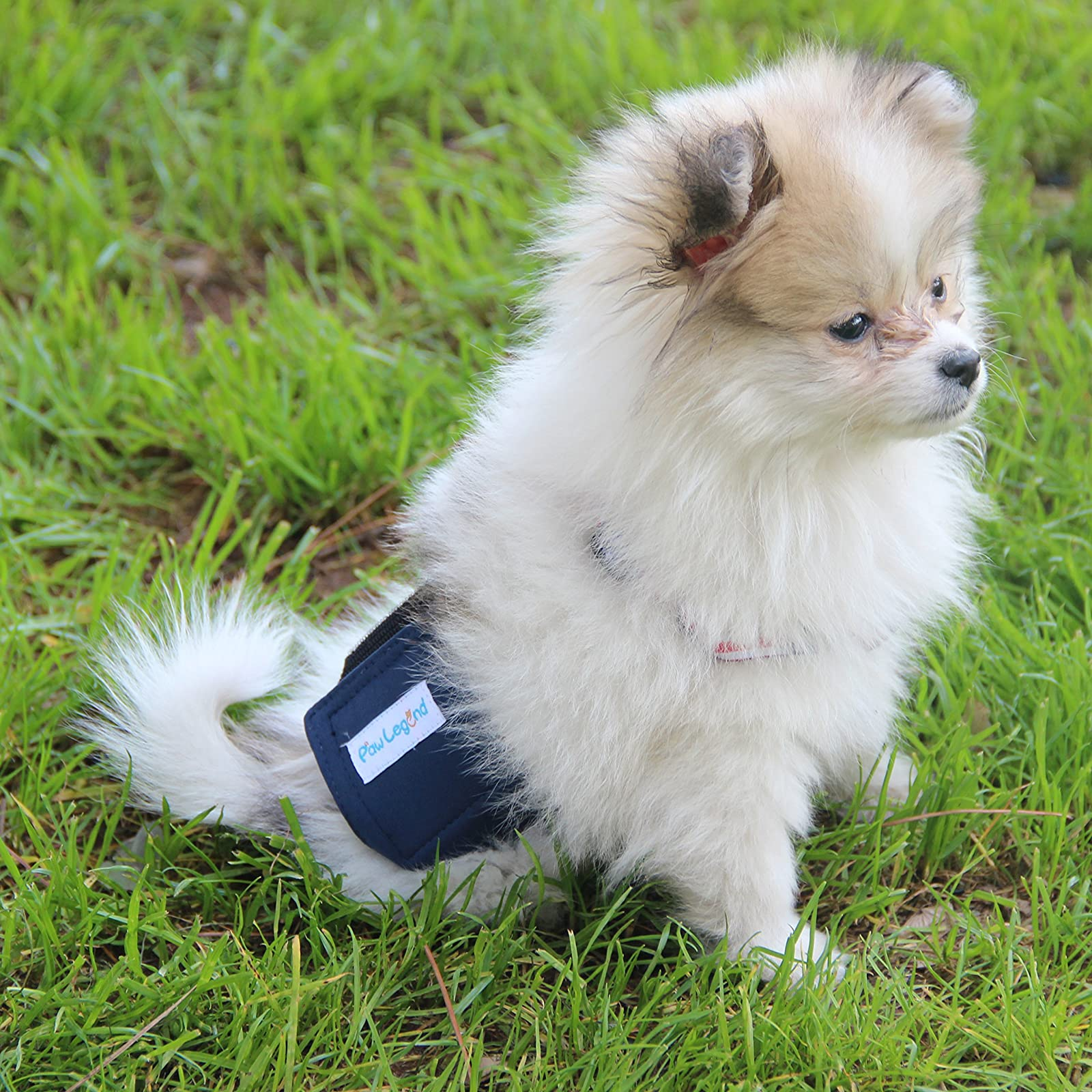 Paw Legend Washable Dog Belly Wrap DiapersMale - 4