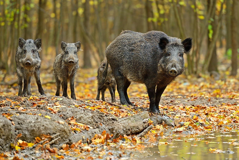 18,6 Joule EXTREM STARKES 230V Weidezaunger/ät mit 11,500 Volt Auch geeignet zur Wildschweinabwehr Wildabwehr Wildzaun