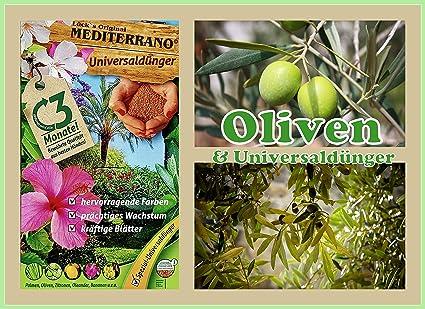 Olivenbaum Dünger  1,5 KG Mediterrano Olivendünger,olivenbaumdünger