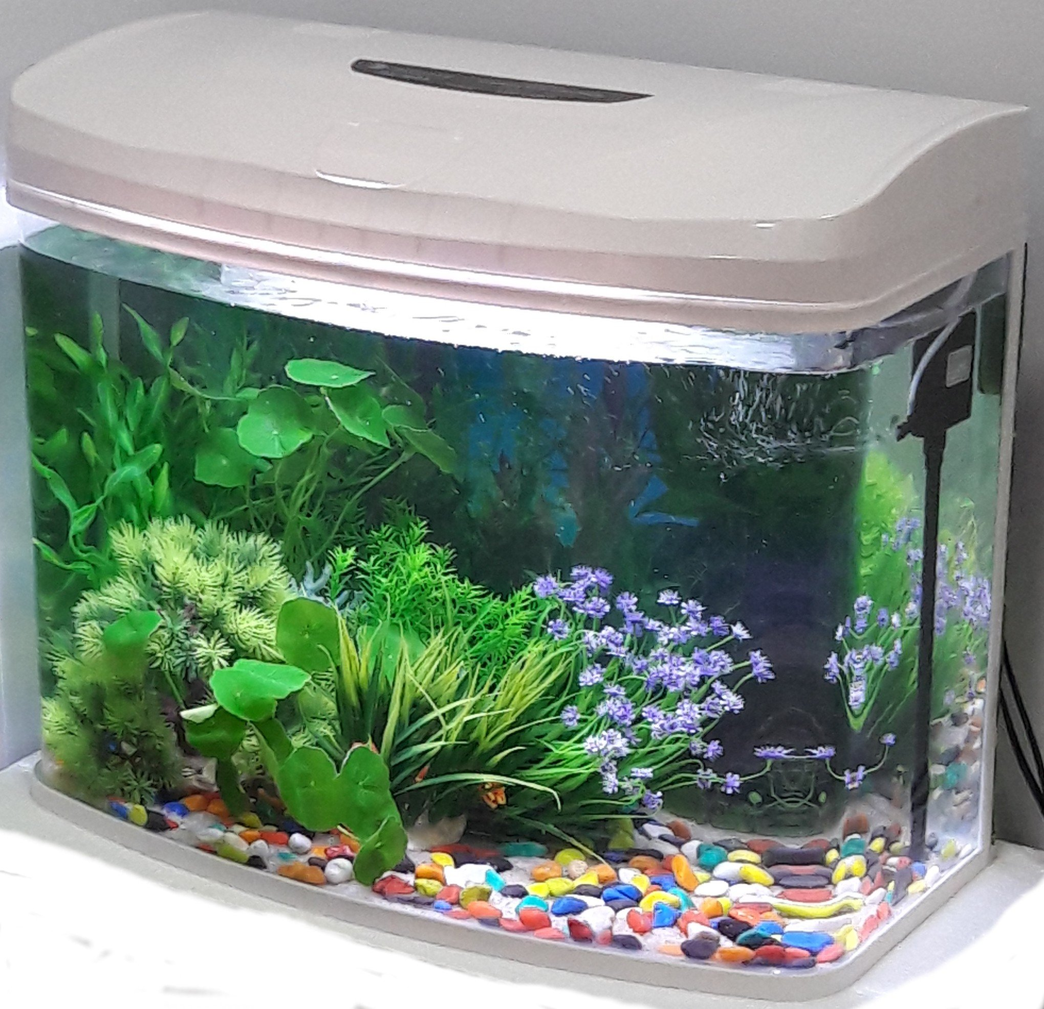 Rs Moulded Glass Aquarium 70l Black Buy Online In India At Desertcart Productid 70043103