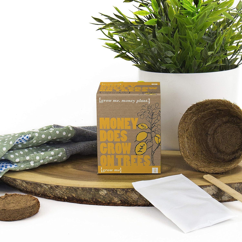 Mags GR130011 - Kit de Cultivo en casa: Amazon.es: Jardín