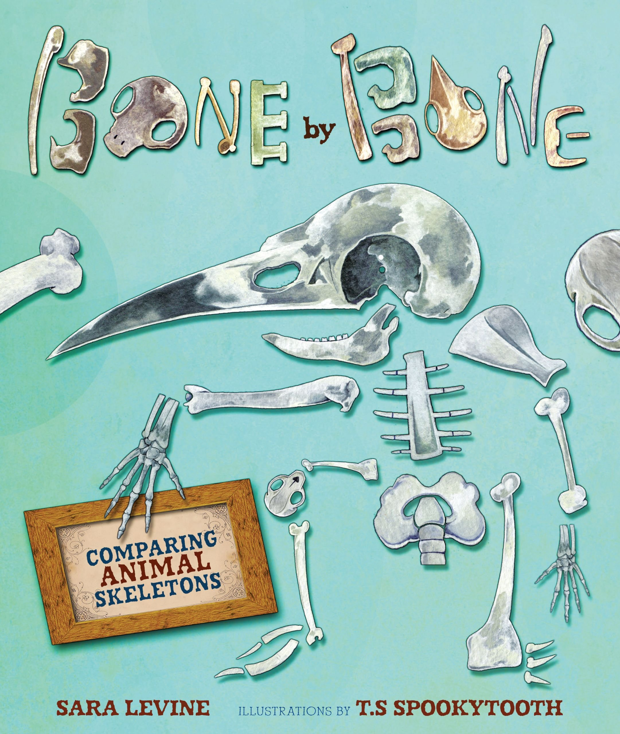 Bone by Bone: Comparing Animal Skeletons: Levine, Sara, Spookytooth, T.S:  9780761384649: Amazon.com: Books