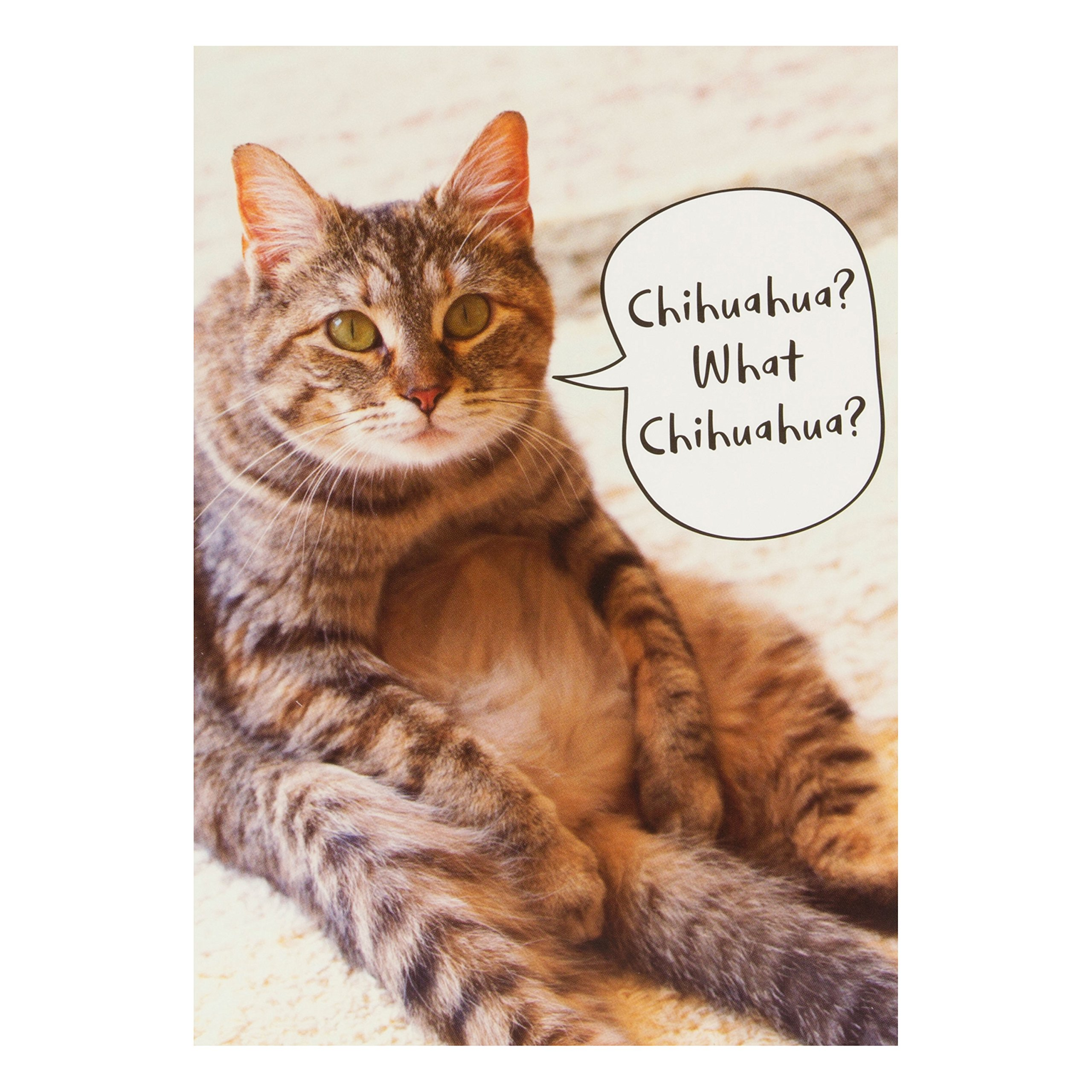 Cat Birthday Card: Amazon.co.uk