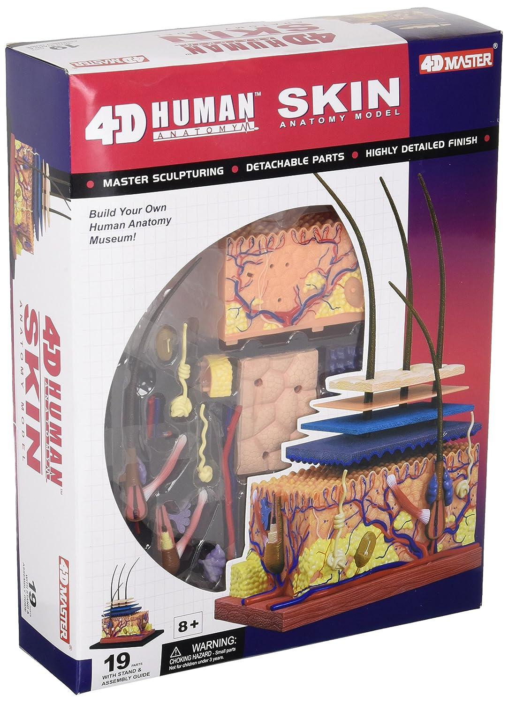 Amazon.com: Famemaster 4D-Vision Human Skin Anatomy Model: Toys & Games