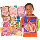 My Body in Action Science Educational Cards by Roylco
