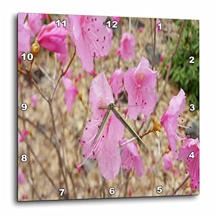 Amazon 3drose Tdswhite Spring Seasonal Nature Photos Pink
