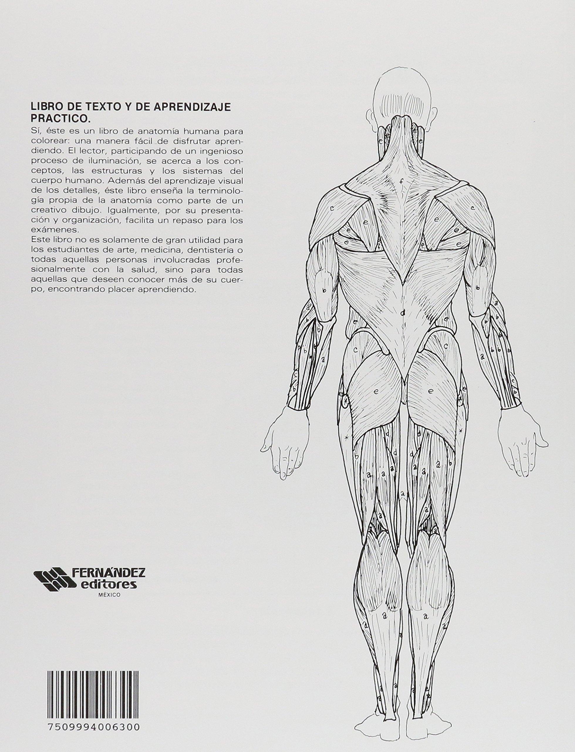 anatomia cromodinamica atlas anatomico para colorear