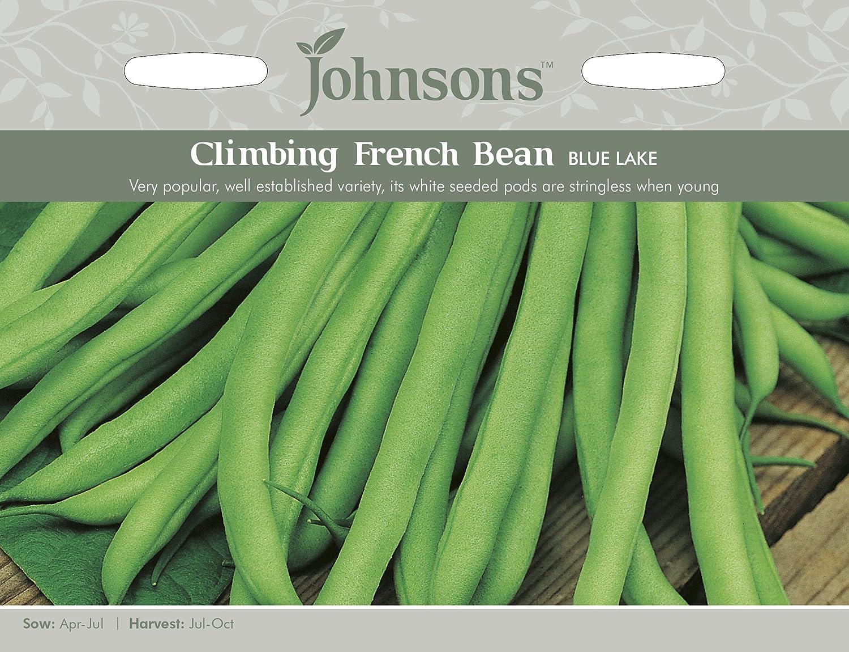 Johnsons UK/JO/PB Climbing French Bean Blue Lake Johnsons Seeds