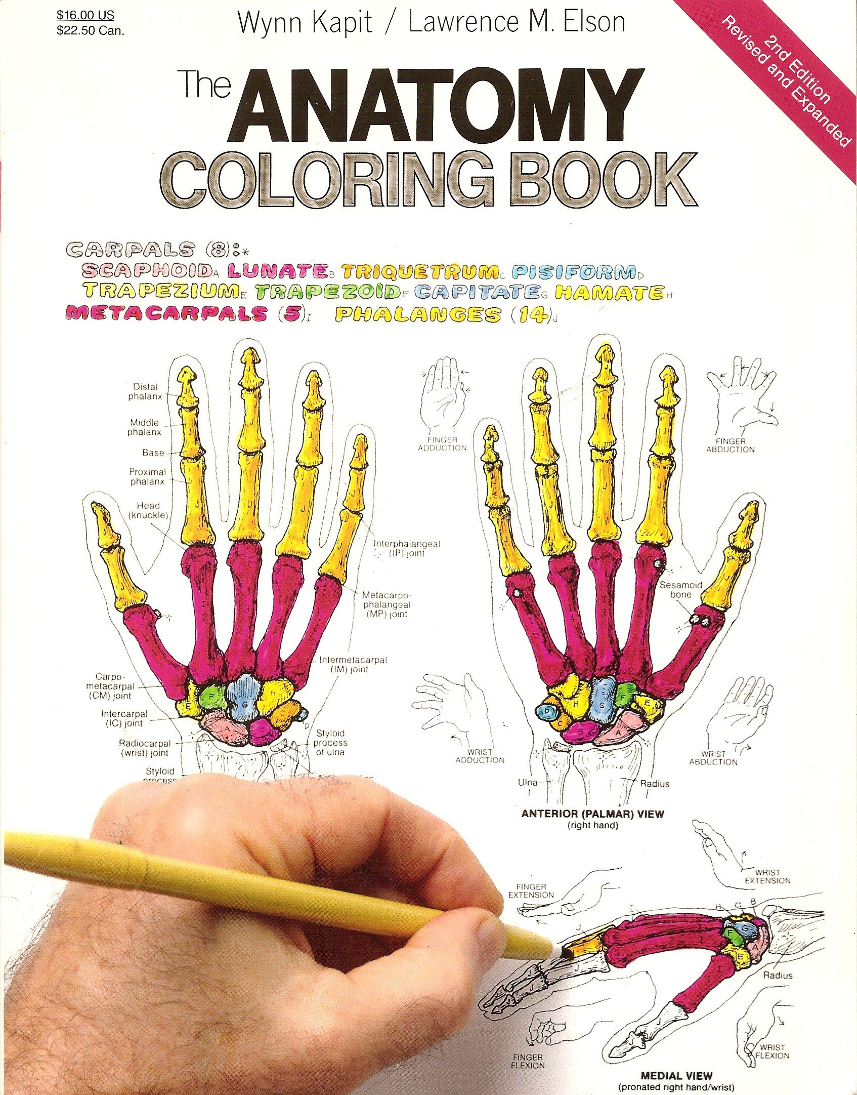 The anatomy coloring book wynn kapit - The Anatomy Coloring Book Second Edition Revised And Expanded Kapit Elson Amazon Com Books