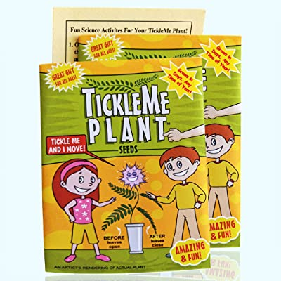 TickleMe Plant Seeds Packets (2) for Party Bag or Christmas Stocking Stuffer! Leaves Fold Together When You Tickle It. Great Science Fun, Green and Educational. Easy to Grow Indoors. It Can Flower.: Health & Personal Care