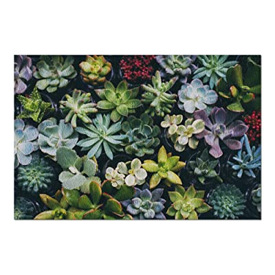 Close Up of Small Succulent Flowers 9031069 (Premium 1000 Piece Jigsaw Puzzle for Adults, 20x30, Made in USA!): Toys & Games