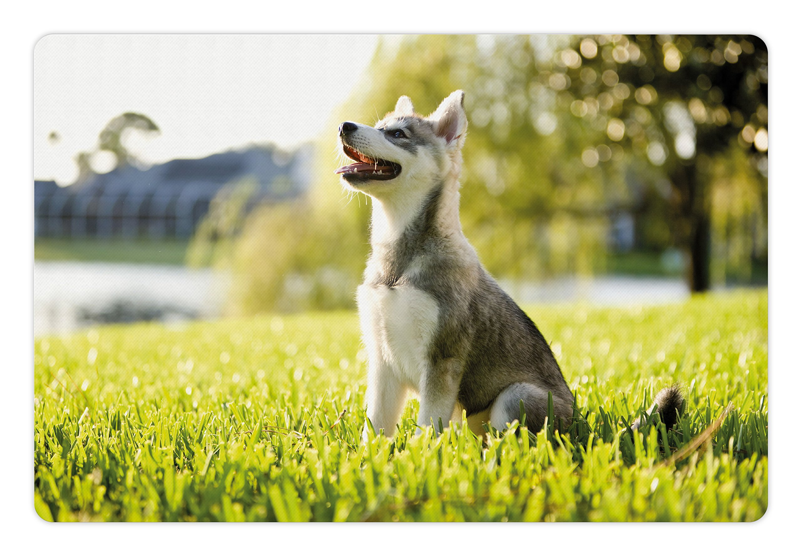 Ambesonne Alaskan Malamute Pet Mat for Food and Water, Klee Kai Puppy Sitting on Grass Looking Up Friendly Young Cute Animal, Rectangle Non-Slip Rubber Mat for Dogs and Cats, Multicolor